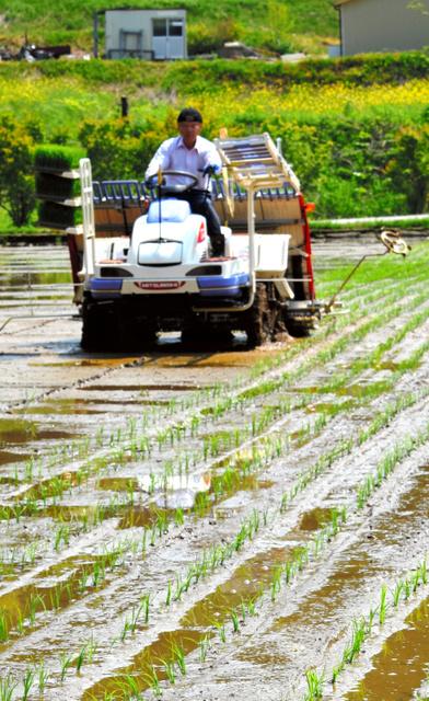 農業再生の期待を込め、進められた田植え=葛尾村