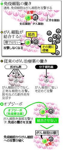 免疫細胞の働き/がん細胞が結合すると/従来のがん治療薬の働き/オプジーボ