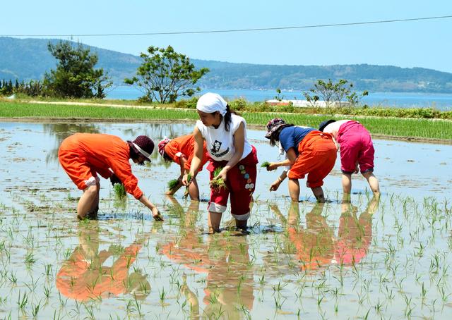 海を望む田んぼで苗を植える「島流し」の参加者たち=七尾市能登島