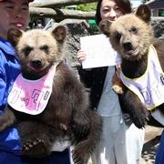 クッタとカイだよ、よろしくね 北海道で双子のクマ