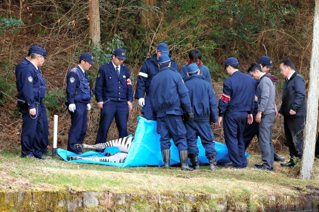 死んだバロンを囲む警察官ら=3月23日、岐阜県土岐市