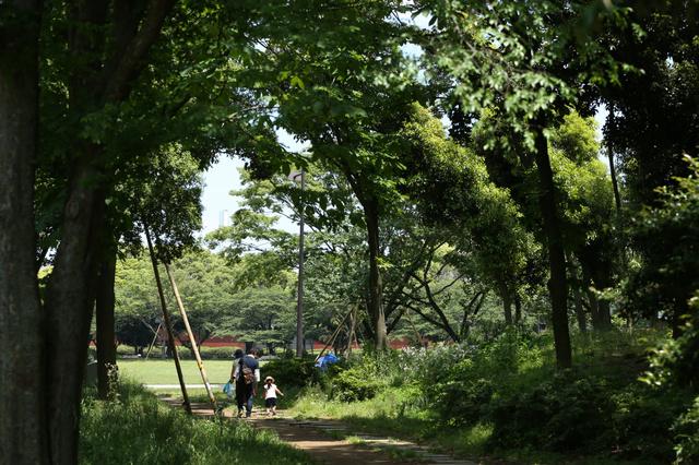 木漏れ日が心地よい散歩道。奥の広場がアーチェリーの会場となる予定だ=5月15日、東京都江東区夢の島2丁目、嶋田達也撮影