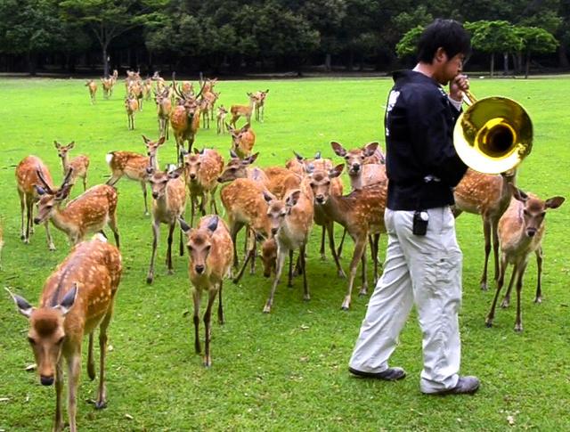 ナチュラルホルンの音を聞いて駆け寄る奈良の鹿たち=奈良公園の春日大社境内飛火野