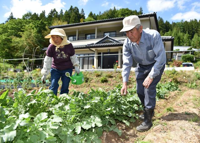 自宅前の畑で、ダイコンなど自分たちで食べるため野菜を育てる松本一郎さん、林子さん夫妻=10日午後、葛尾村、福留庸友撮影