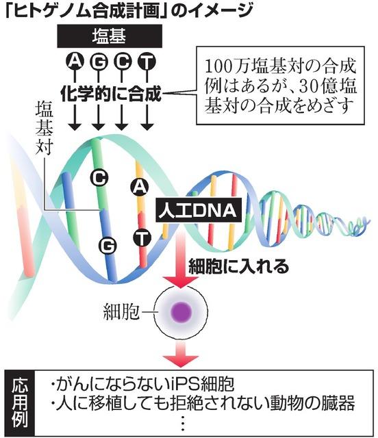 「ヒトゲノム合成計画」のイメージ