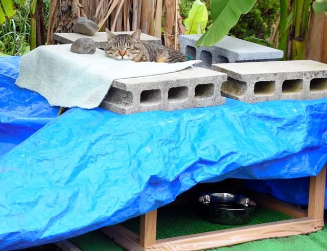 木の下にある餌置き場の上で日なたぼっこする「地域猫」の1匹。そばにはトイレ用に砂を入れた箱も置かれている=静岡市駿河区