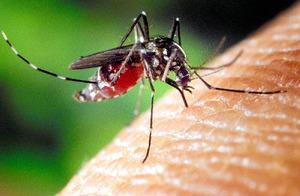 今年も蚊にご用心 デング熱・ジカ熱…妊婦も不安