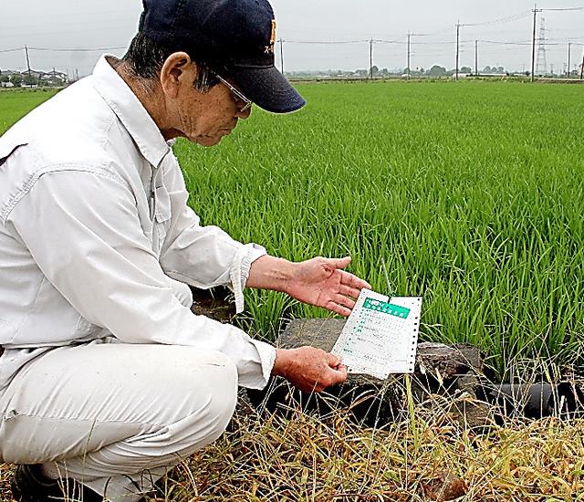 飼料用米を植え始めた石塚さん。田の脇にある、転作を示す「表示票」を確認する=23日、茨城県筑西市