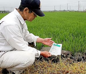 飼料用米を植え始めた石塚…