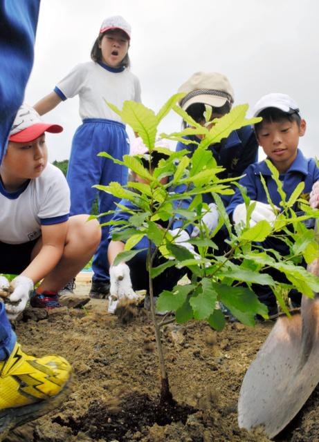 学校で育てたドングリの苗木を植える児童ら=大船渡市三陸町越喜来