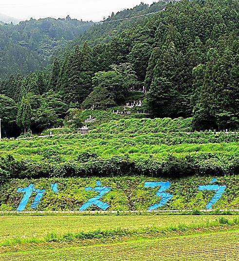 復興拠点にある田畑には、ブルーシートで「かえろう」とかたどった文字が浮かぶ。大熊町の元幹部らが作ったという=22日、福島県大熊町、大月規義撮影