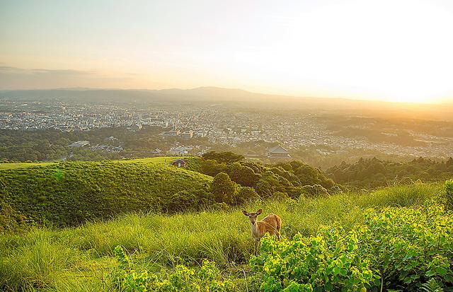 若草山の山頂から見た奈良市街=伊藤菜々子撮影