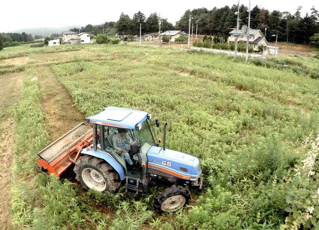 避難指示解除を前に、市の委託で雑草に覆われた農地の刈り取り作業をする農家。一度は表土を削り取って除染したが、雑草はすぐ伸びる。作付けの予定はないが、荒廃を防ぐため、半年ごとに除草を続けている=7日午前、福島県南相馬市小高区、福留庸友撮影