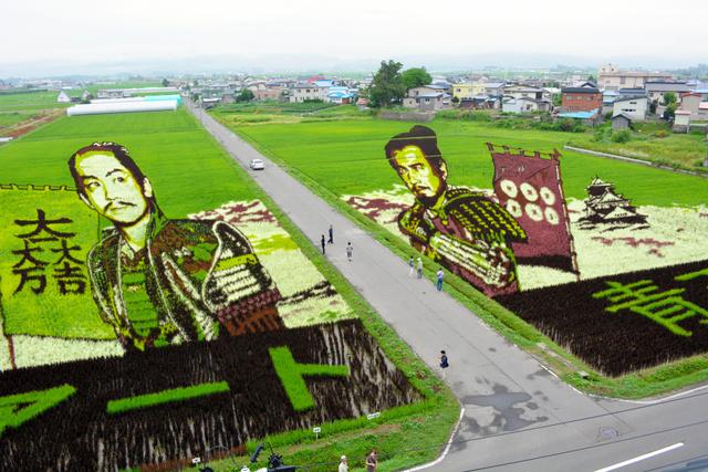 田んぼに石田三成(左)と真田昌幸がくっきり浮かび上がった第1会場=田舎館村