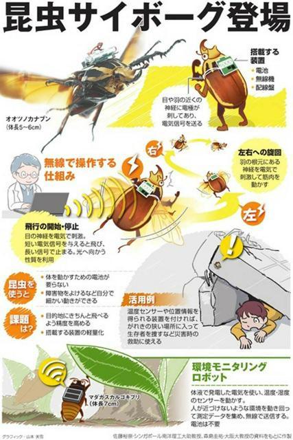 昆虫サイボーグ登場<グラフィック・山本美雪>