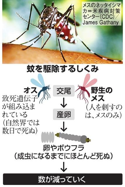 蚊を駆除するしくみ