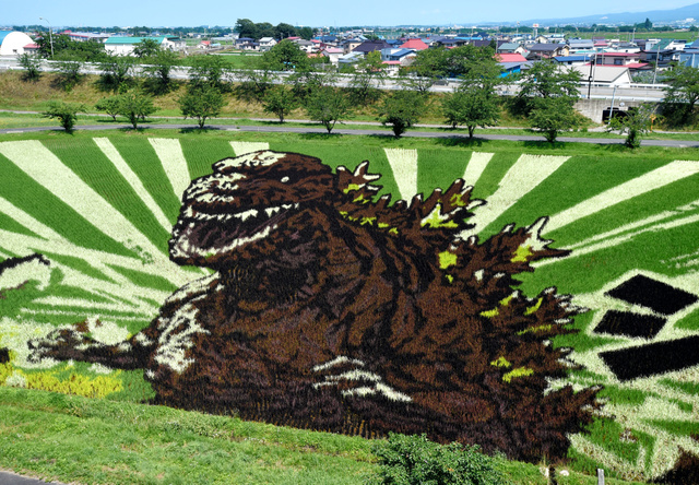 第2会場の田んぼには、9色の稲でゴジラが描かれた=青森県田舎館村、福留庸友撮影