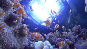 360度の映像の一部。カクレクマノミなどの魚たちと一緒に水槽の中にいるような気分を味わえる=竹谷俊之撮影
