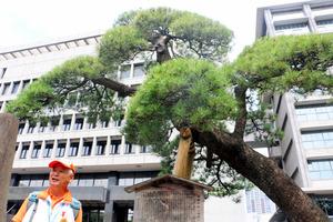 千葉県庁舎前の「羽衣の松」を案内する広瀬正一さん=千葉市中央区市場町