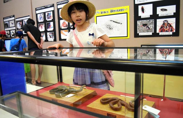 子どもたちに人気のヘビの標本=鹿児島市の県立博物館