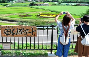 田んぼアートの写真を撮る観光客=高山村中山