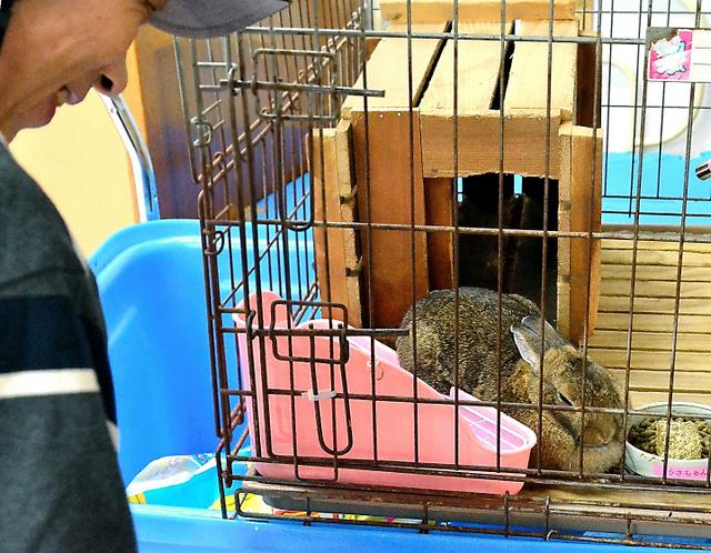 食堂で飼育しているウサギを見つめる入所男性=広島県東広島市
