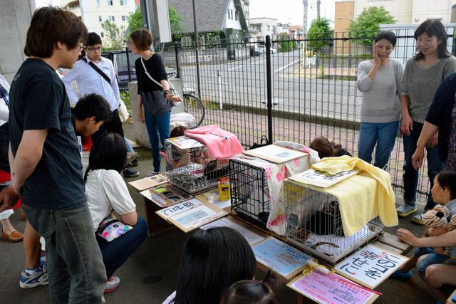 大勢の人が集まった猫の譲渡会=福井市内
