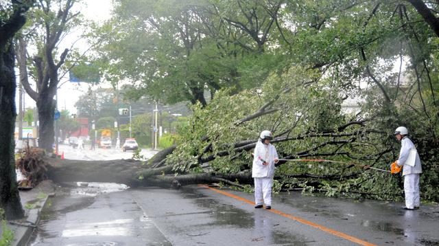強風で桜の木が倒れ、通行止めとなった県道=水戸市千波町