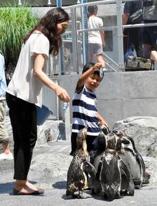 水族館のペンギン、猛暑は大丈夫? 定番の氷、実は…