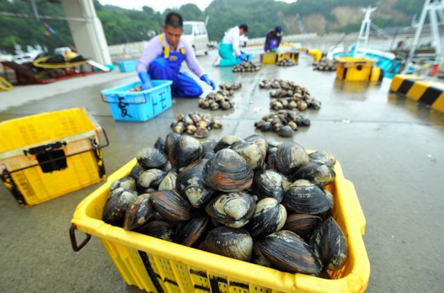 試験操業で水揚げされたホッキ貝=6月、いわき市の久之浜港