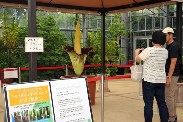 開花したショクダイオオコンニャクの写真を撮る客=京成バラ園
