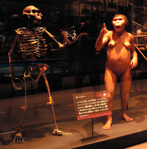 猿人、木から落ちて死ぬ? 318万年前の「ルーシー」