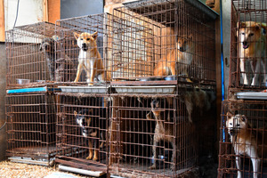 業者が飼育する犬。トタン小屋の中に並べられた二段重ねのケージで飼われていた=矢板市