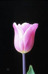 金賞を受賞した「春乙女」=県提供