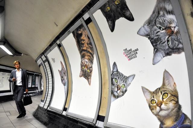 広告枠がネコだらけになったロンドン地下鉄の駅=14日、ロンドン、笹井継夫撮影