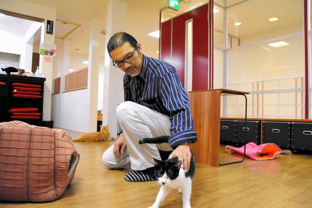店内を自由に動き回る猫をなでる「ハッピーキャット」の田添浩之代表=和歌山市本町2丁目