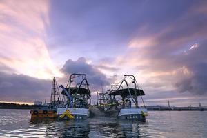朝焼けの中、網を入れる場所を探す巾着網漁の網船=大阪府の大阪湾、遠藤真梨撮影