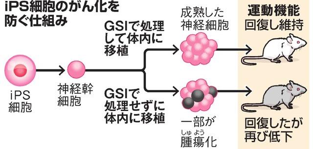 iPS細胞のがん化を防ぐ仕組み