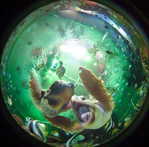 カメラに興味を示すアカウミガメの子ども=竹谷俊之撮影
