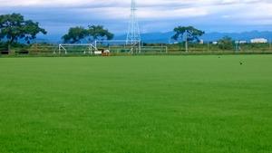 芝生植え 緑のじゅうたん
