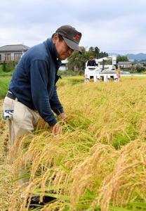 市民らが待ち望んだ地酒販売へ向けた酒米の収穫=高萩市秋山