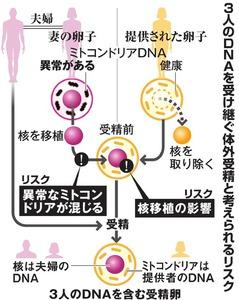 3人のDNAを受け継ぐ体外受精と考えられるリスク