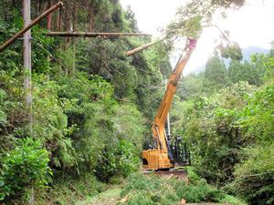 日南市の倒木被害現場では南那珂森林組合と協力して復旧作業にあたった=日南市の内之田地区、九電提供