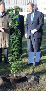 広島の「被爆2世」のイチョウの苗木と国連の潘基文事務総長(右)=3日、スイス・ジュネーブの国連欧州本部、松尾一郎撮影