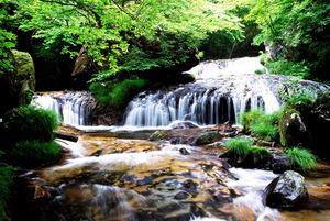 林野庁職員の反対で伐採から守られた大滝の自然林=高原山山麓、塩谷町提供