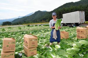 御嶽山の見える畑で、御嶽はくさいを収穫する志水敏春さん=木曽町開田高原
