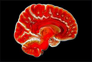 より効果的な脳トレとは……=本文と写真は関係ありません。写真はRex Features via AP Images