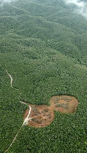 建設されているヘリパッド。周辺には広大な「やんばる」の森が広がる=9月23日、沖縄県国頭村、本社機から、川村直子撮影