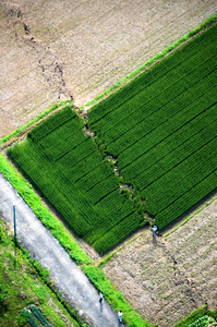 横ずれを起こした断層が走る堂園地区の畑=5月2日、朝日新聞社ヘリから