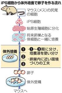 iPS細胞から体外培養で卵子を作る流れ